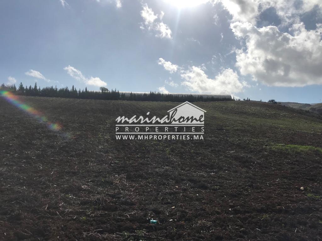 (TV0013) Terrain Agricole à Malalienne-Tétouan